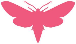 strawberry moth, jessica duthu